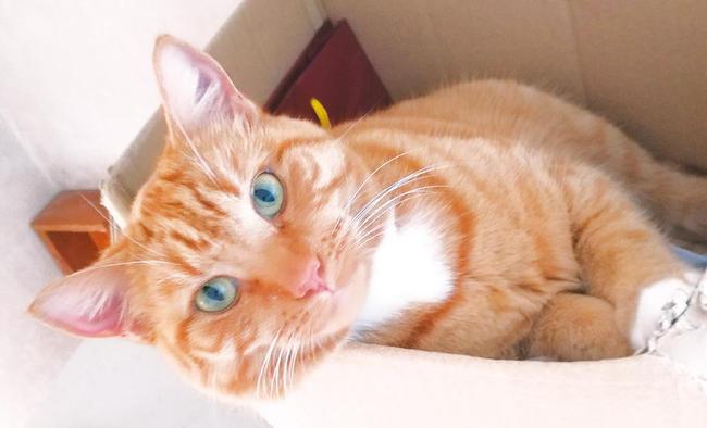 (c)ecube_170920_youngcats01.jpg